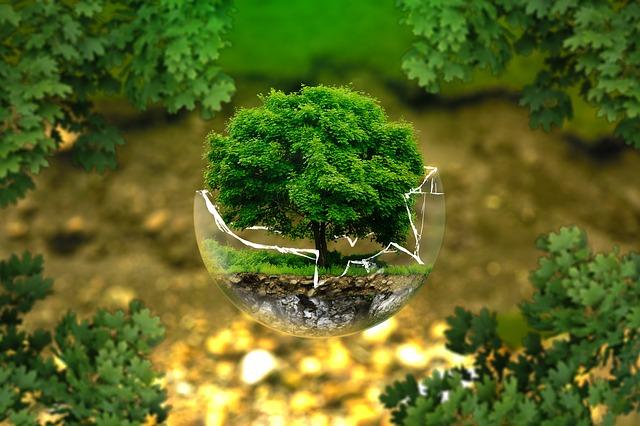 Medio ambiente y desarrollo sostenible en Precia Molen